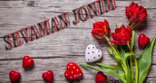 tulips-red-love-romantic-wallpaper-preview